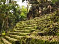 Moss covered Maya ruins steps, Guatemala