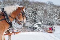 Horse and sleigh riding, Iowa, USA