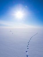 Footprints in snow, Biei, Hokkaido, Japan