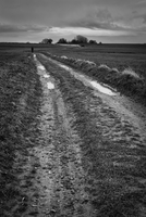 Lonely man walking on dirt road, Korbeek-Dijle, Bertem, Belgium