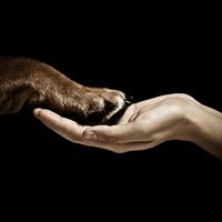 Studio shot of male hand holding bulldog paw, Tenerife, Canary Islands, Spain