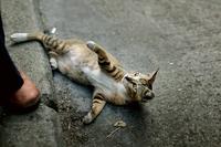 Playful cat lying on street
