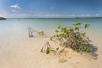 Mangrove in Sian Kaan, Sian Kaan, Tulum, Quintana Roo, Mexico