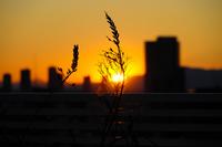 Sunset Tokyo Winter