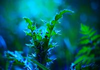 Spider web on plant