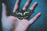 Butterfly in man's hand