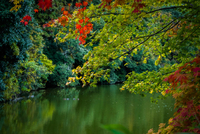 Calm lake in forest, Kyoto, Japan