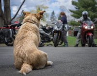 Rear view of dog sitting on road, bikers in foreground