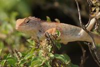 Close-up of chameleon (Chamaeleonidae) on branch