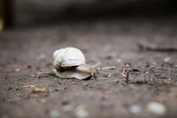 Snail on ground