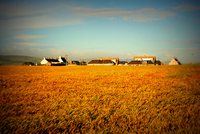 Crops and farm at sunset, Dunaverty, Campbeltown, Scotland, UK