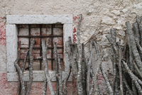 Branches leaning against old building with bricked up window