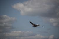 Pelican flying against sky