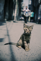 Kitten sitting on pavement