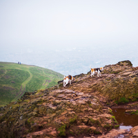 Landscape with two beagles on mountain, Edinburgh, Scotland