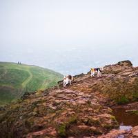 Landscape with two beagles on mountain, Edinburgh, Scotland