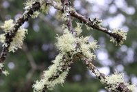 Close-up of moss on branches against blurry background