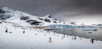 Colony of penguins, Cuverville Island, Antarctica