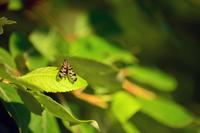 Bug perching on leaf