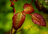 Green and red leaves close-up