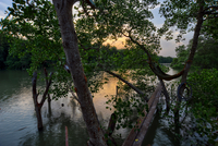 Hammock on mangrove tree on riverbank, Klang, Selangor, Malaysia