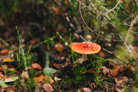 View of red mushroom
