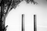 Tree and two industrial chimneys, Montreal, Quebec, Canada