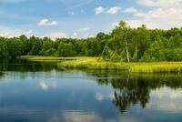 Forest reflecting in lake, Rhein, Deutschland