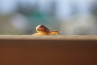 Profile shot of snail on wooden surface