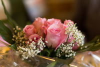 Babys breath (Gypsophila paniculata L.) and roses