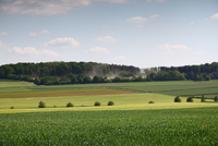 Green farmland