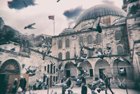 Flock of pigeons flying in front of mosque, Istanbul, Turkey
