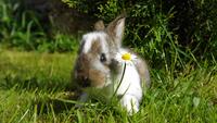 Portrait of rabbit sitting in grass next to daisy flower