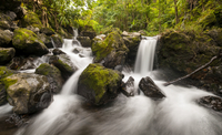 Little waterfall in forest with mossy rock, Maui, Hawaii, USA