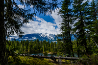 Pine forest with mountains and lake Revelstoke in background, Revelstoke, British Columbia, Canada