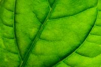 Close up of leaf, Kallhall, Sweden