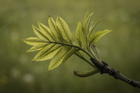 Close-up of leaves on branch against blurry background