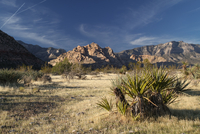 Bushes and grass on desert under mountains in Red Rock Canyon, Las Vegas, Nevada, USA