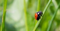 Close-up of ladybird on grass