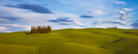 Cypresses (Cupressus) on hill, Montalcino, Siena, Italy