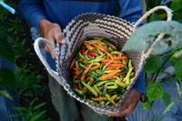 Man holding chilies in basket, Yogyakarta, Indonesia