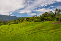 Green terraced asian rice fields on slope under cloudy sky