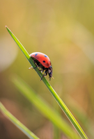 Close-up view of ladybug sitting on grass