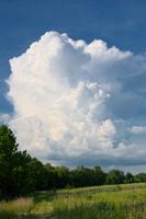 Huge cloud above forest
