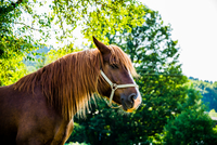 Profile of horse, Bavaria, Germany