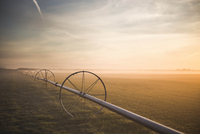 Wheels on field at sunrise, Long Island, New York, USA