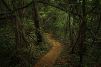Path among trees in dark forest, Jeju, Korea