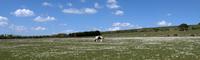 Pony on green pasture