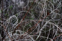 Close up view of twisted twigs, Almaty, Kazakhstan