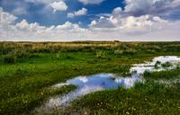 View of pond among grass, Xilamuren, Inner Mongilia, China